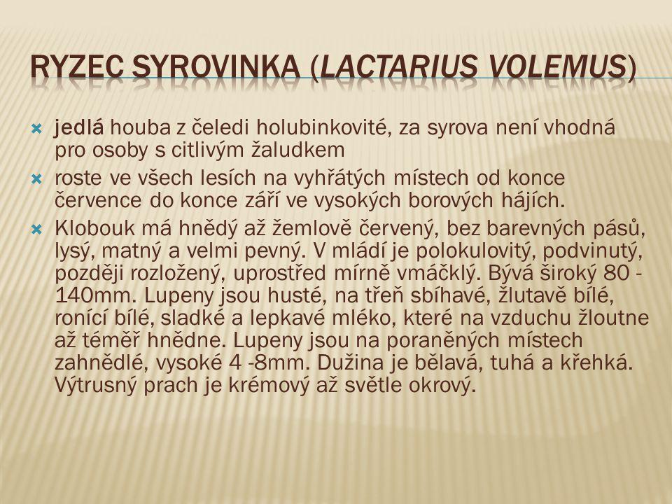 Ryzec syrovinka (Lactarius volemus)