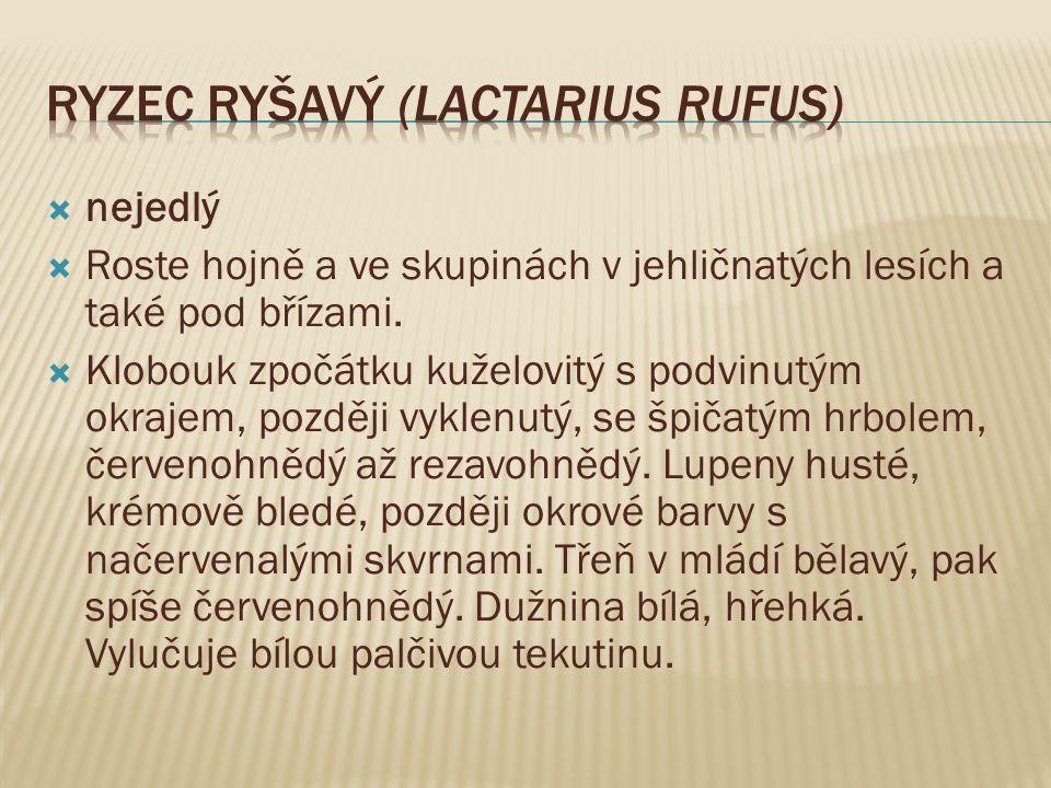Ryzec ryšavý (Lactarius rufus)