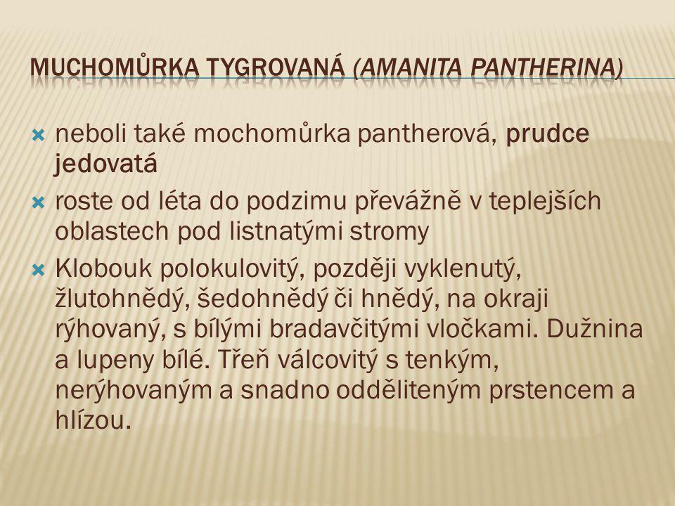 Muchomůrka tygrovaná (Amanita pantherina)