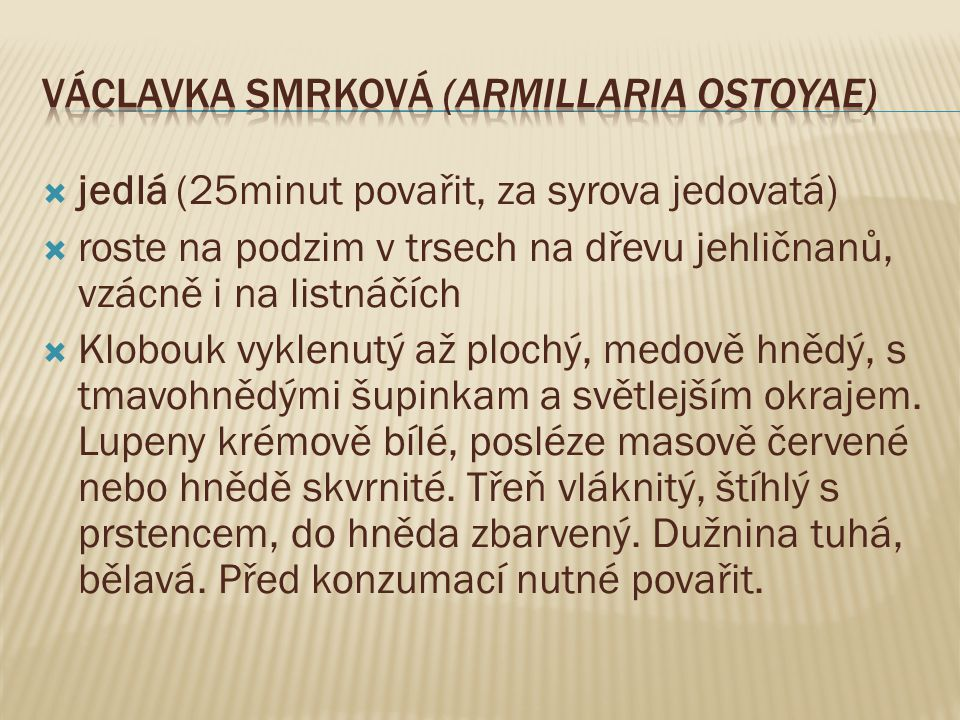 Václavka smrková (Armillaria ostoyae)