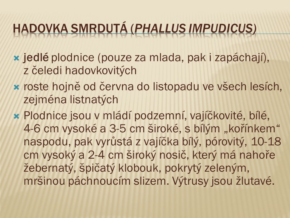 Hadovka smrdutá (Phallus impudicus)