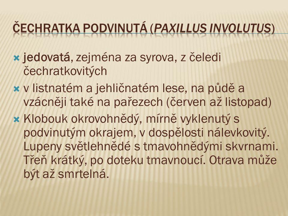 Čechratka podvinutá (Paxillus involutus)