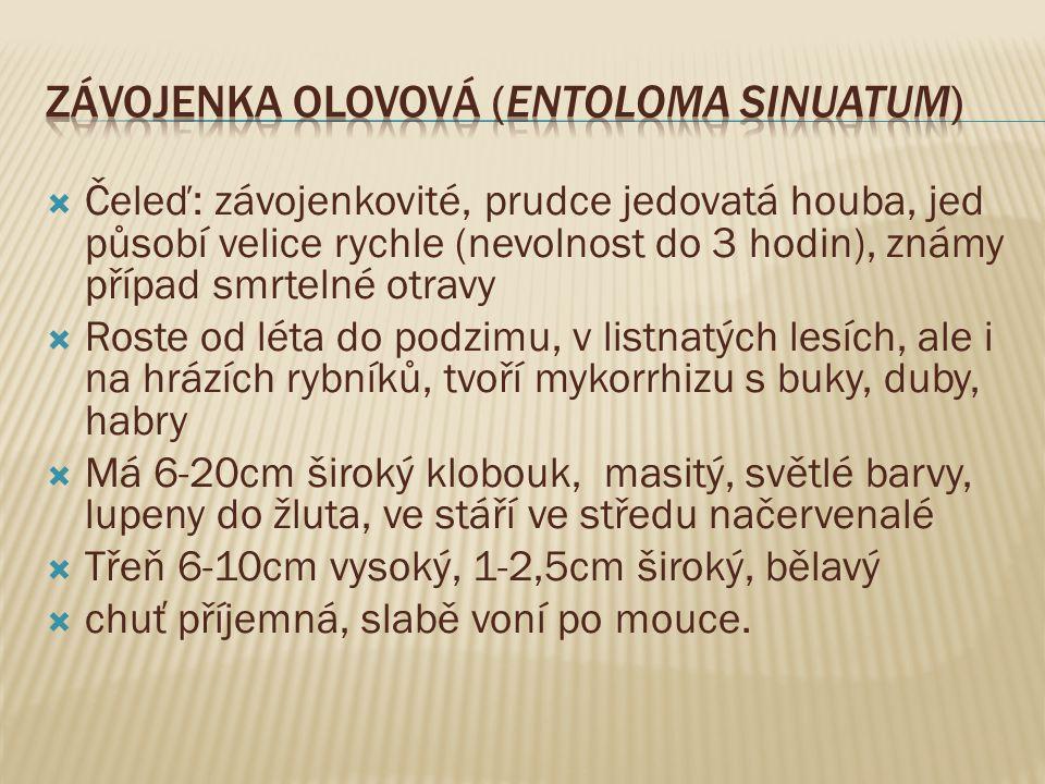 Závojenka olovová (Entoloma sinuatum)
