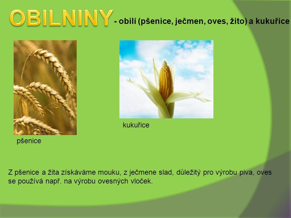 OBILNINY - obilí (pšenice, ječmen, oves, žito) a kukuřice kukuřice