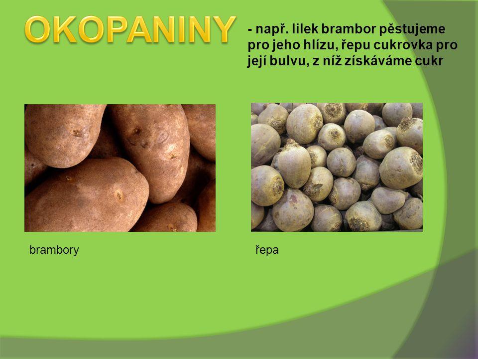 OKOPANINY - např. lilek brambor pěstujeme pro jeho hlízu, řepu cukrovka pro její bulvu, z níž získáváme cukr.