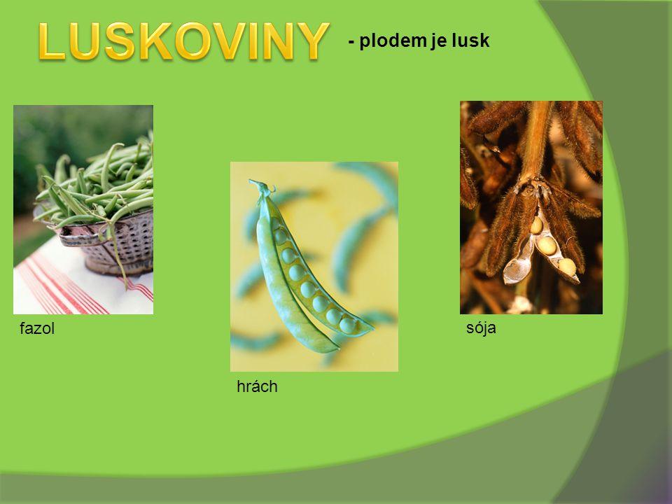 LUSKOVINY - plodem je lusk fazol sója hrách
