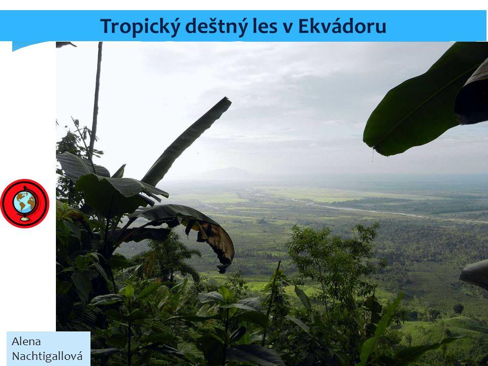 Tropický deštný les v Ekvádoru