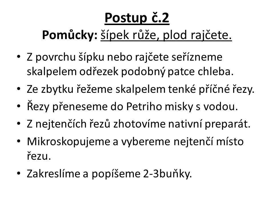 Postup č.2 Pomůcky: šípek růže, plod rajčete.