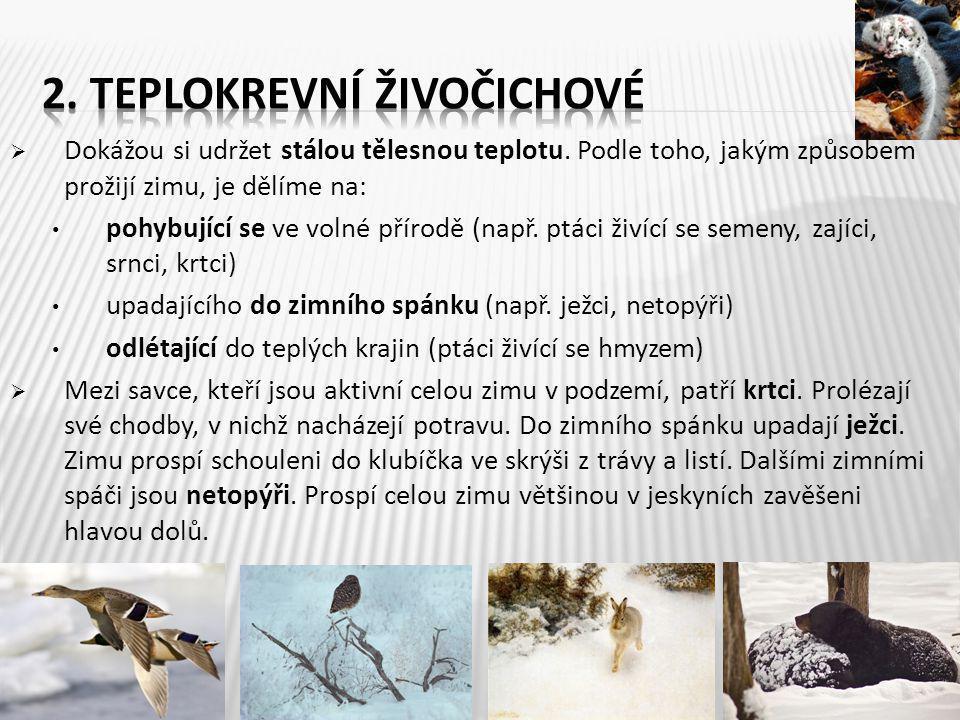 2. Teplokrevní živočichové
