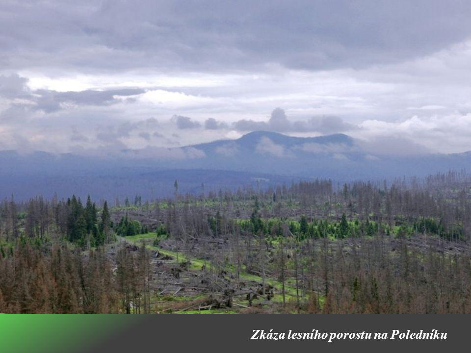 Zkáza lesního porostu na Poledníku