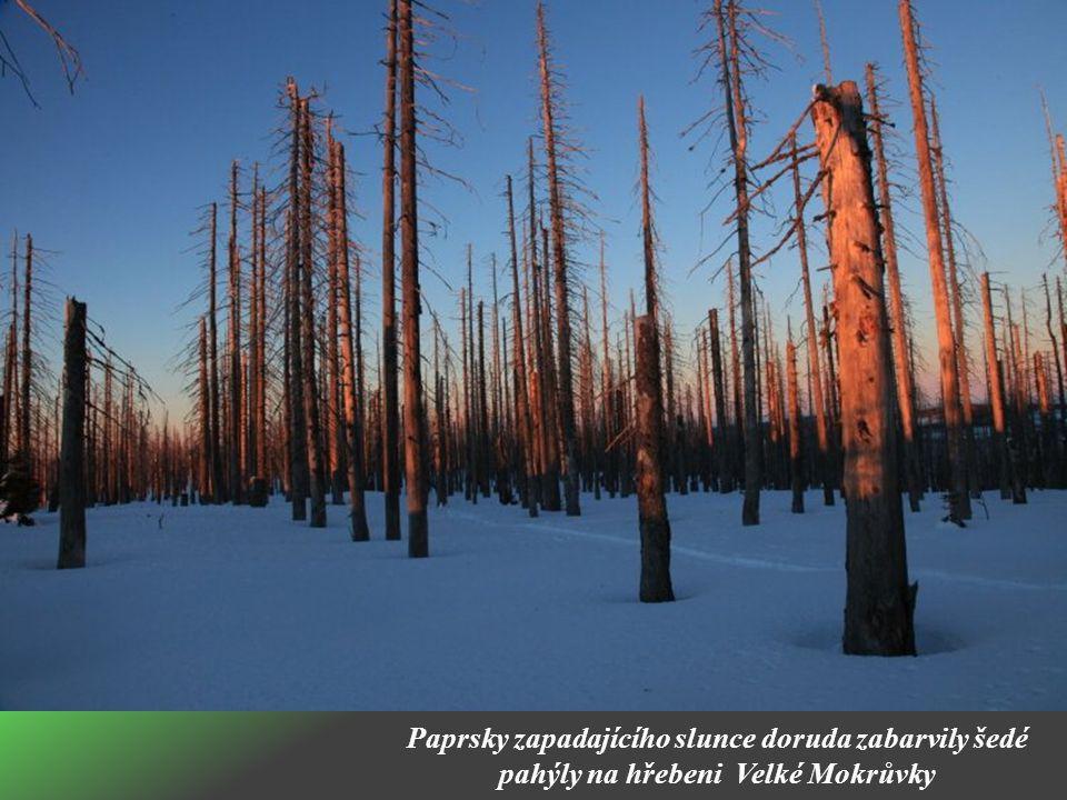 Paprsky zapadajícího slunce doruda zabarvily šedé pahýly na hřebeni Velké Mokrůvky