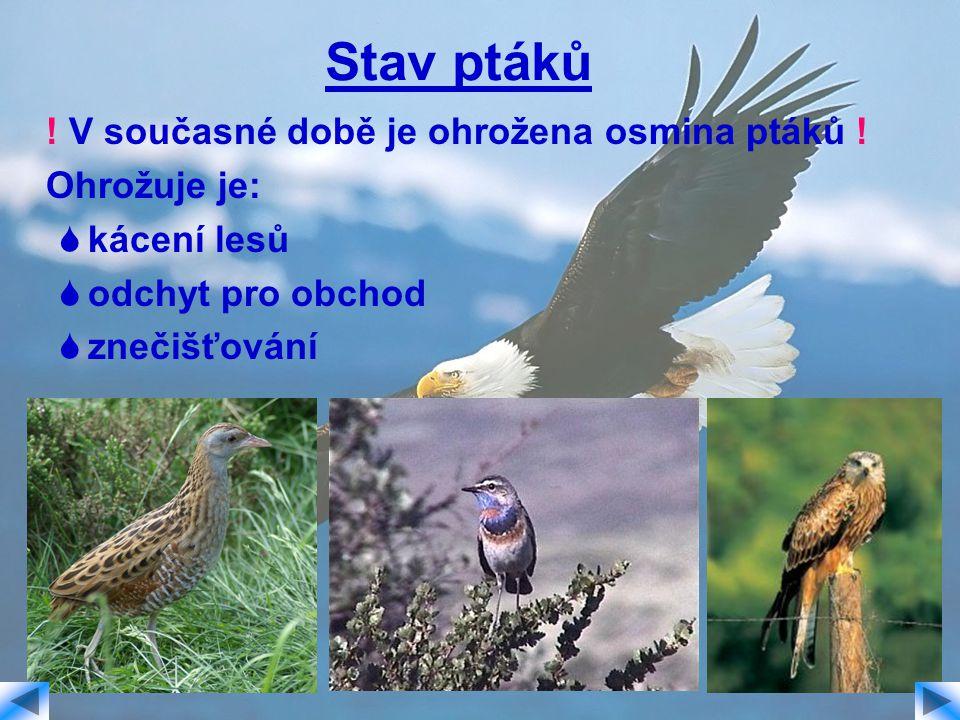 Stav ptáků ! V současné době je ohrožena osmina ptáků ! Ohrožuje je: