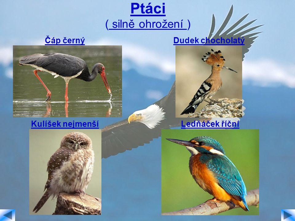 Ptáci ( silně ohrožení )