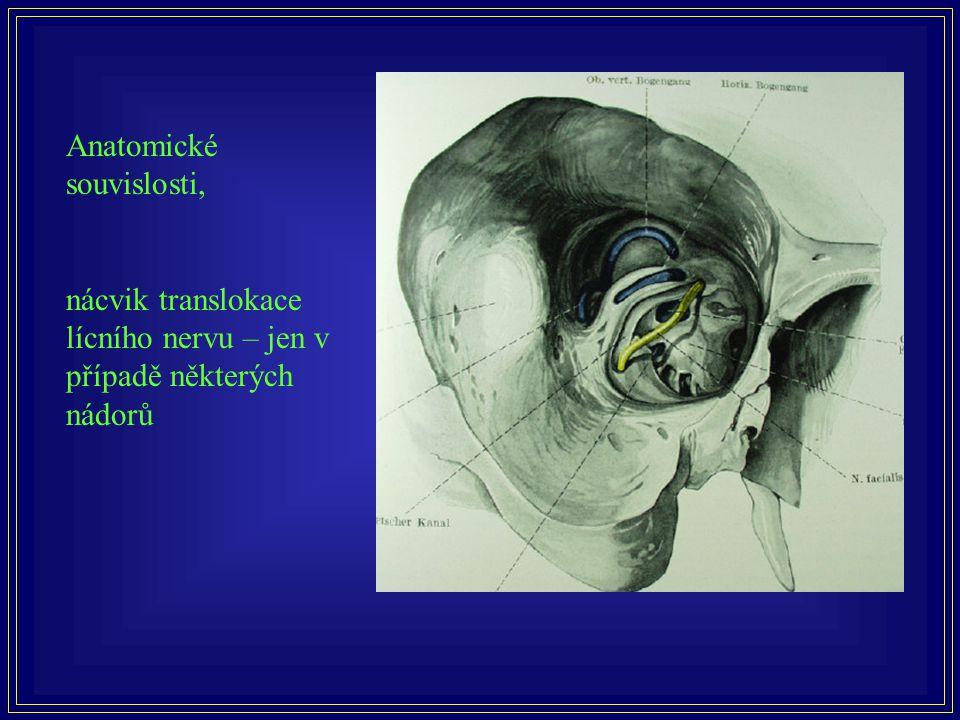 Anatomické souvislosti,