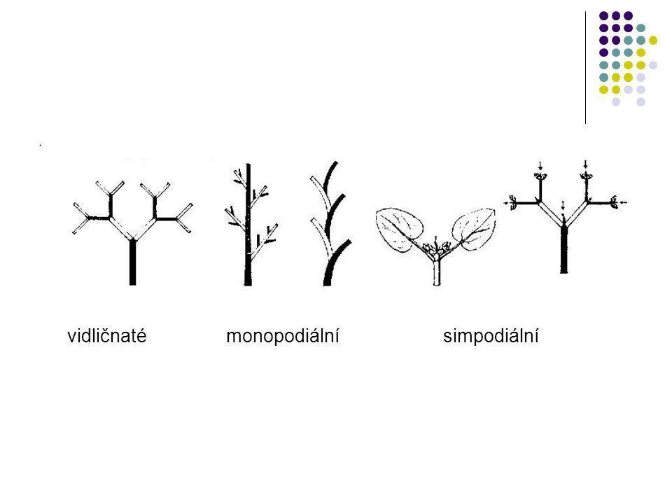 vidličnaté monopodiální simpodiální