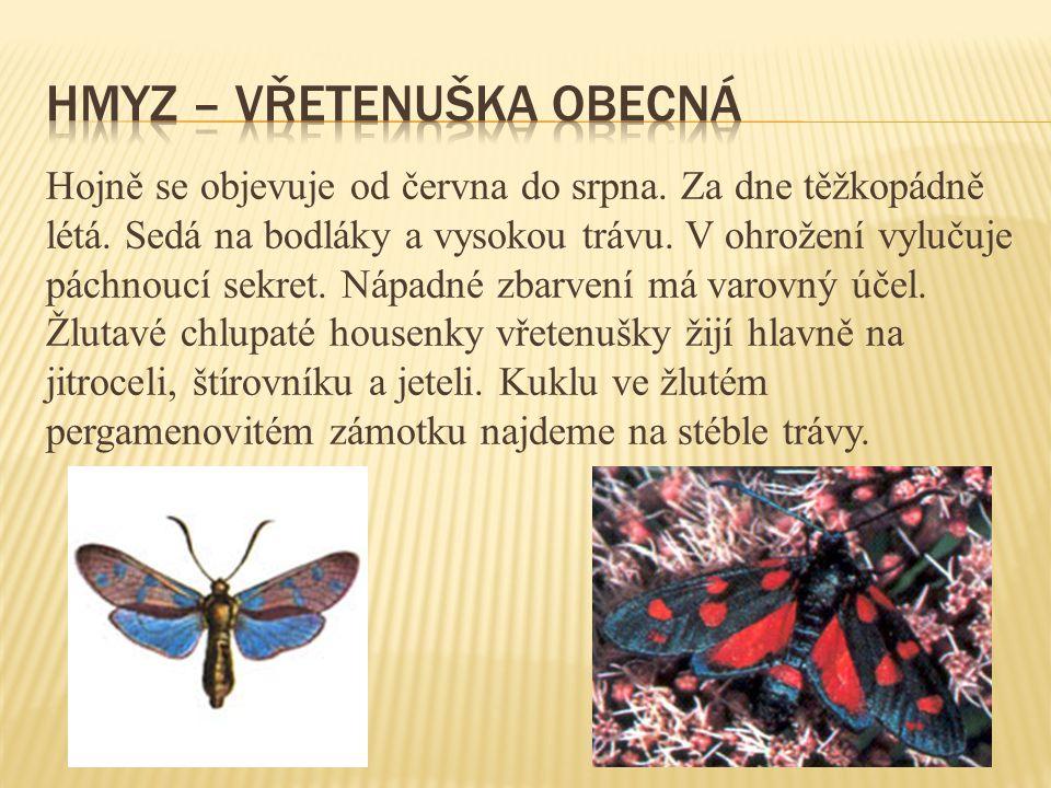Hmyz – vřetenuška obecná