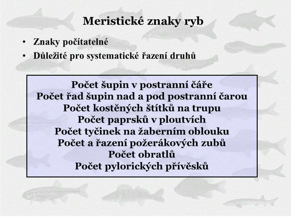 Meristické znaky ryb Znaky počítatelné
