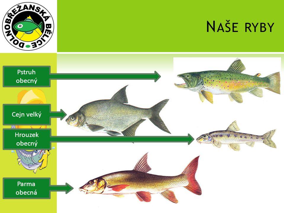 Naše ryby Pstruh obecný Cejn velký Hrouzek obecný Parma obecná