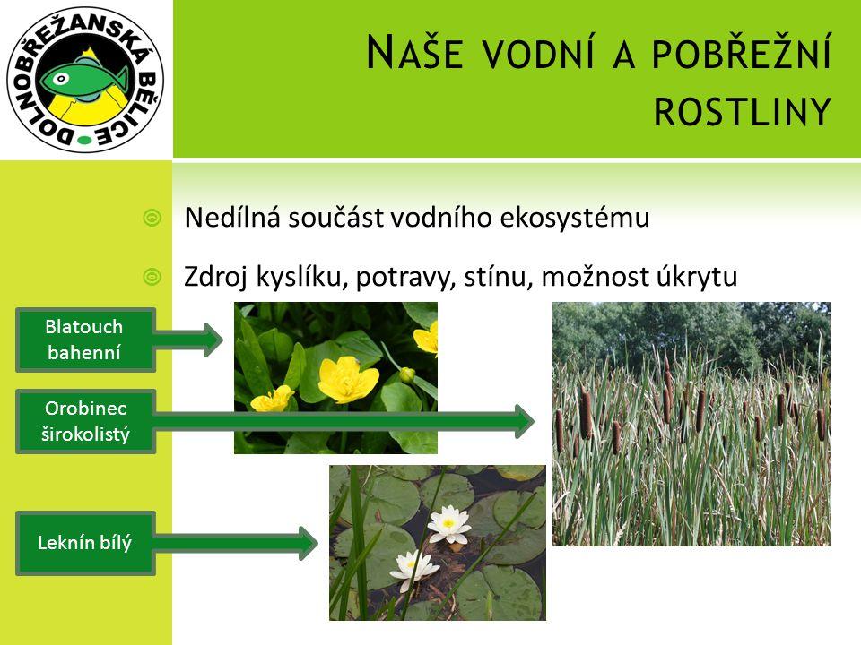 Naše vodní a pobřežní rostliny