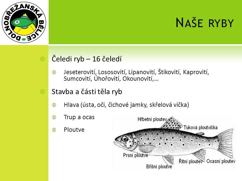 Naše ryby Čeledi ryb – 16 čeledí Stavba a části těla ryb
