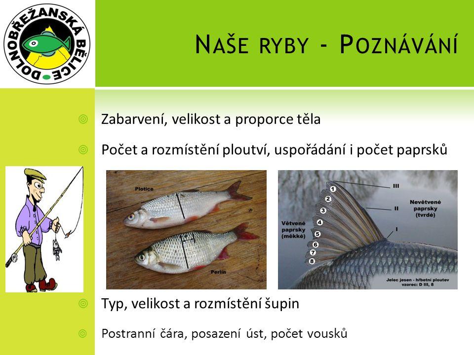 Naše ryby - Poznávání Zabarvení, velikost a proporce těla