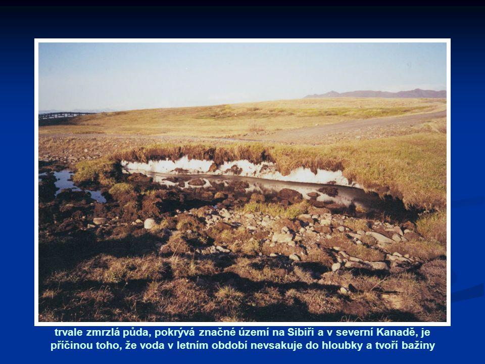trvale zmrzlá půda, pokrývá značné území na Sibiři a v severní Kanadě, je příčinou toho, že voda v letním období nevsakuje do hloubky a tvoří bažiny