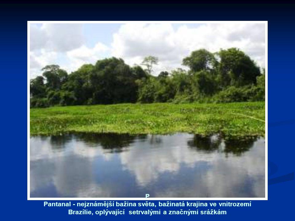 P Pantanal - nejznámější bažina světa, bažinatá krajina ve vnitrozemí Brazílie, oplývající setrvalými a značnými srážkám.