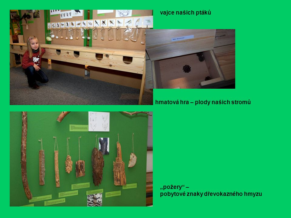 """vajce našich ptáků hmatová hra – plody našich stromů """"požery – pobytové znaky dřevokazného hmyzu"""