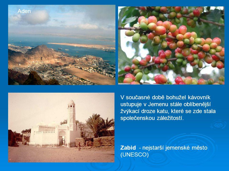Aden V současné době bohužel kávovník ustupuje v Jemenu stále oblíbenější žvýkací droze katu, které se zde stala společenskou záležitostí.