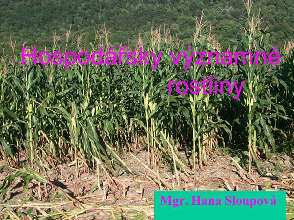 Hospodářsky významné rostliny