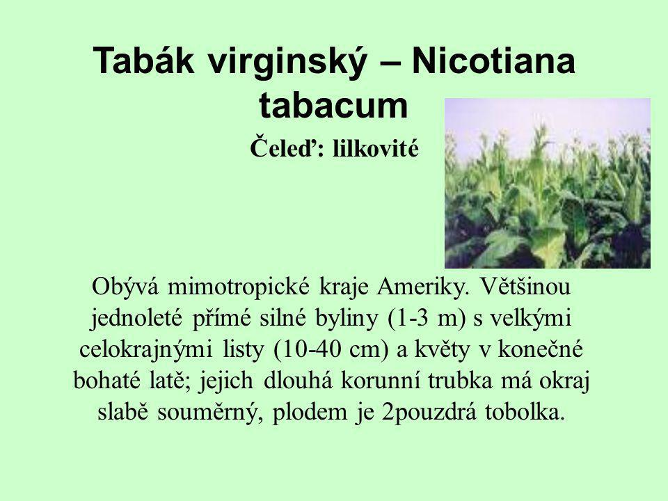 Tabák virginský – Nicotiana tabacum