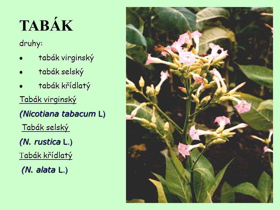 TABÁK druhy: · tabák virginský · tabák selský · tabák křídlatý