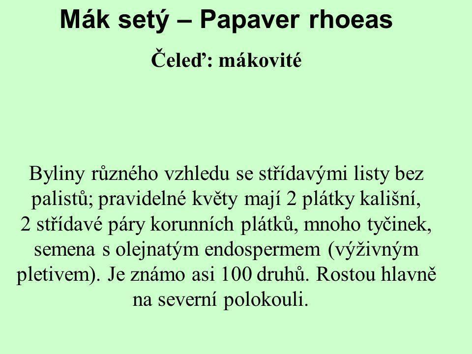 Mák setý – Papaver rhoeas