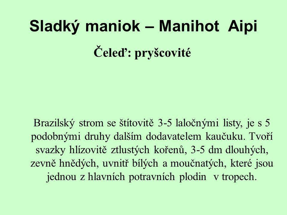 Sladký maniok – Manihot Aipi