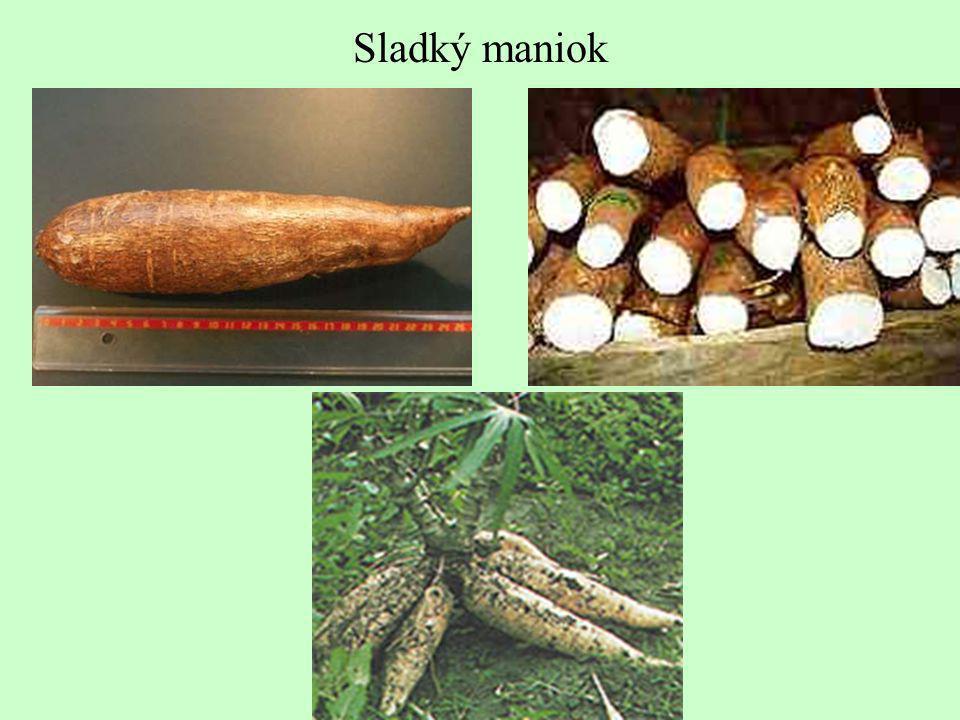 Sladký maniok
