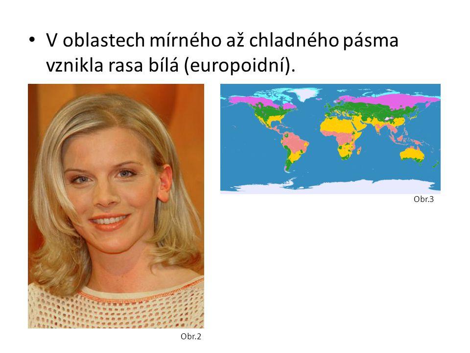 V oblastech mírného až chladného pásma vznikla rasa bílá (europoidní).