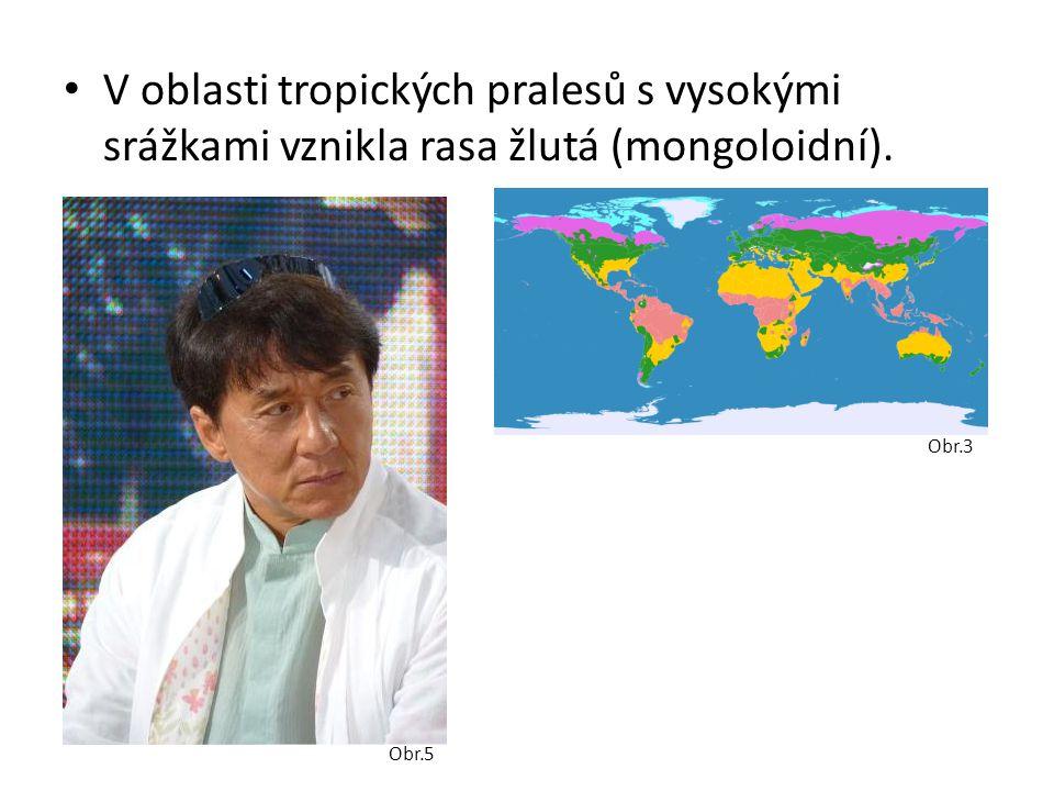 V oblasti tropických pralesů s vysokými srážkami vznikla rasa žlutá (mongoloidní).