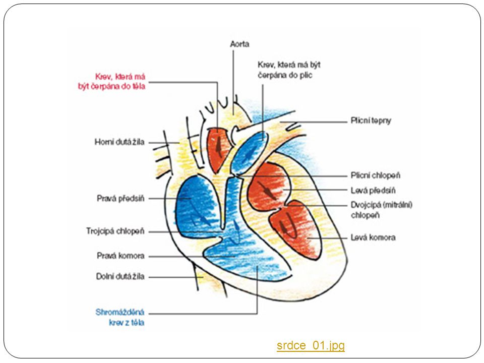 srdce_01.jpg