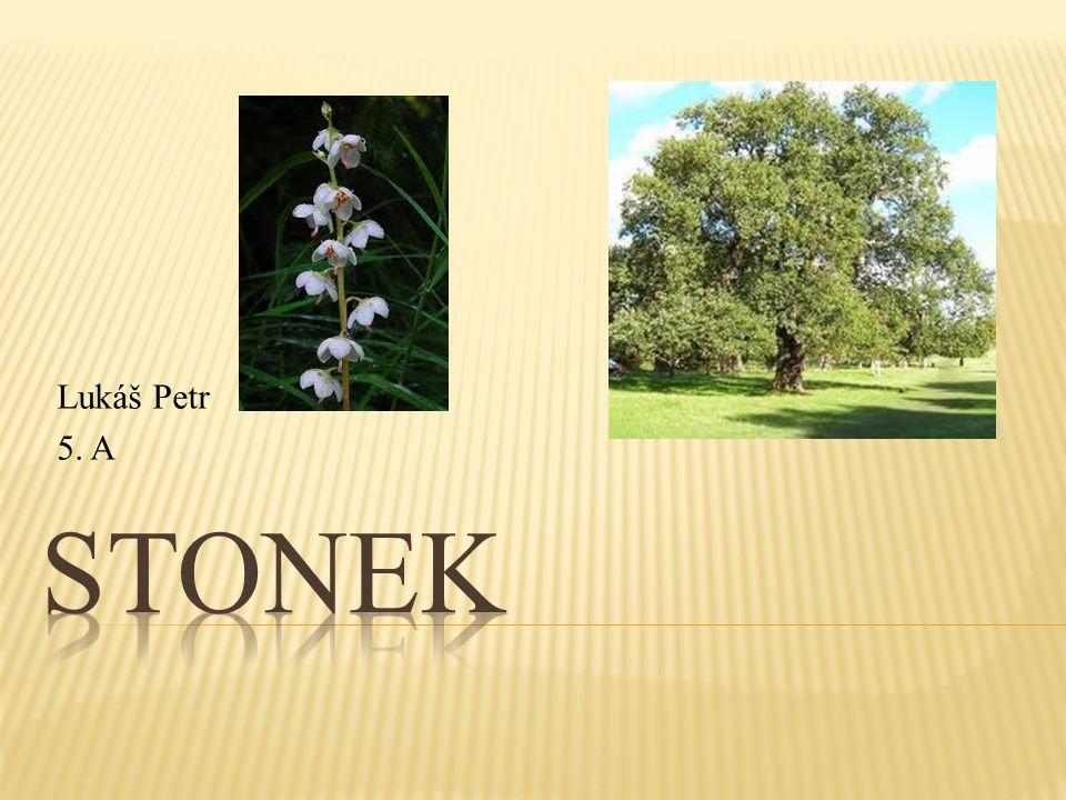 Lukáš Petr 5. A Stonek