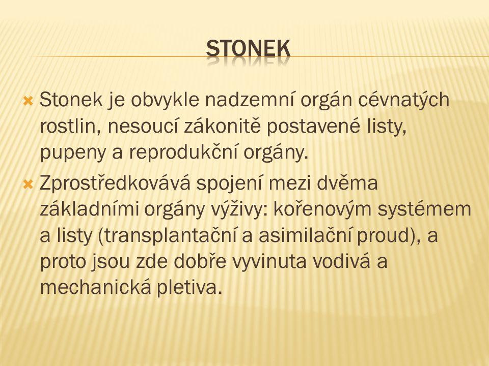 stonek Stonek je obvykle nadzemní orgán cévnatých rostlin, nesoucí zákonitě postavené listy, pupeny a reprodukční orgány.