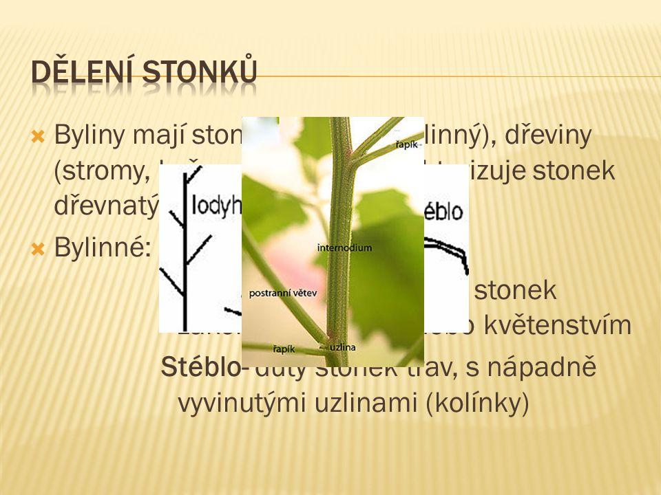 Dělení stonků Byliny mají stonek dužnatý (bylinný), dřeviny (stromy, keře, polokeře) charakterizuje stonek dřevnatý.