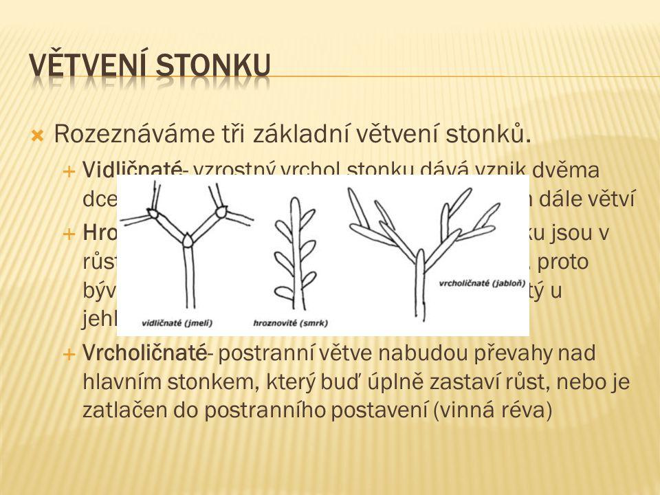 Větvení stonku Rozeznáváme tři základní větvení stonků.