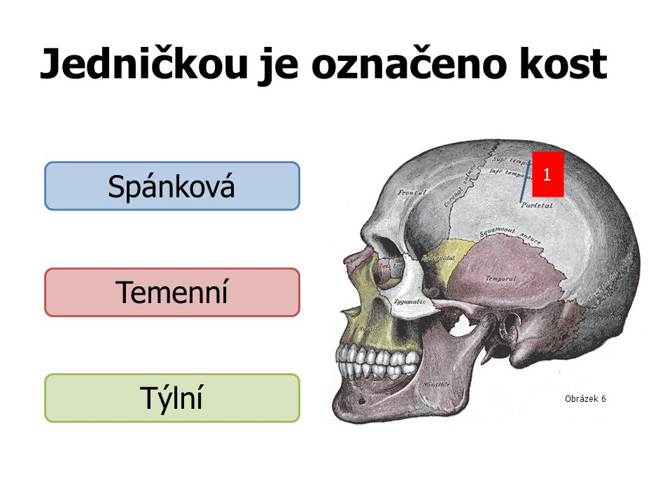 Jedničkou je označeno kost