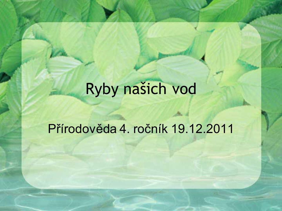 Ryby našich vod Přírodověda 4. ročník 19.12.2011