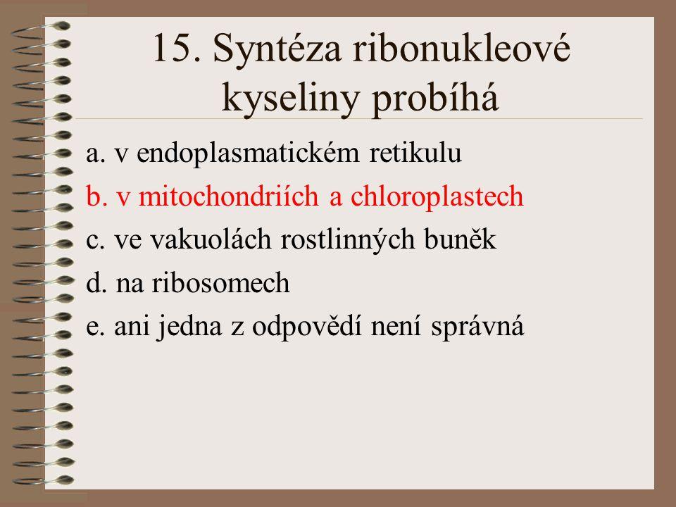 15. Syntéza ribonukleové kyseliny probíhá