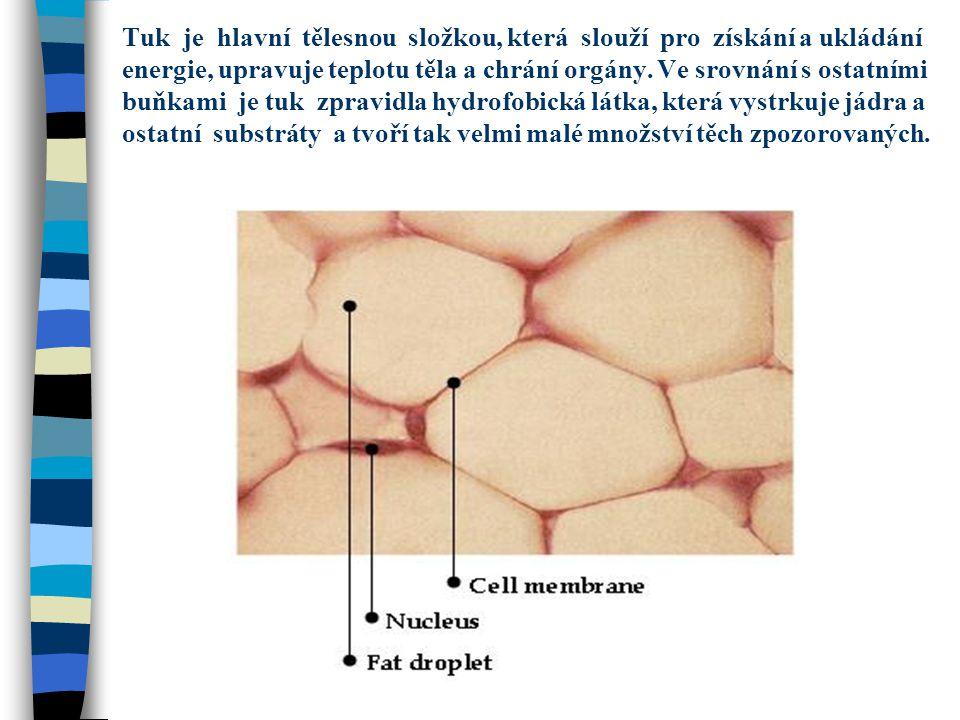 Tuk je hlavní tělesnou složkou, která slouží pro získání a ukládání energie, upravuje teplotu těla a chrání orgány.