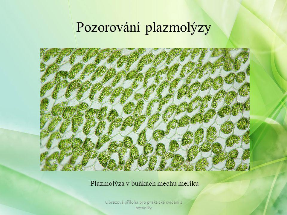 Pozorování plazmolýzy