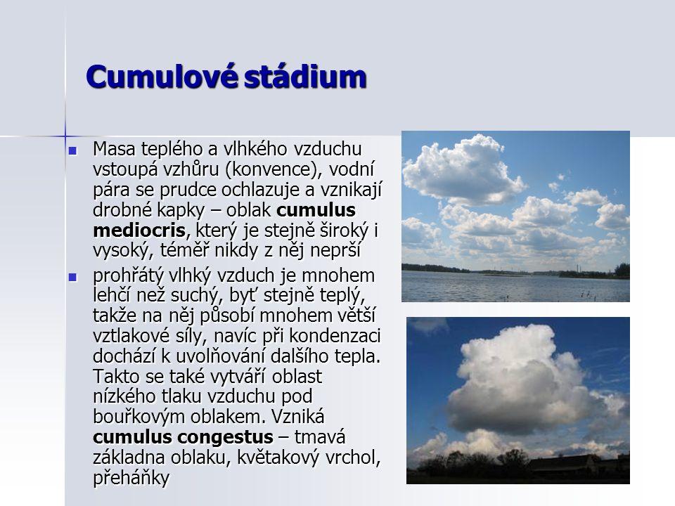 Cumulové stádium