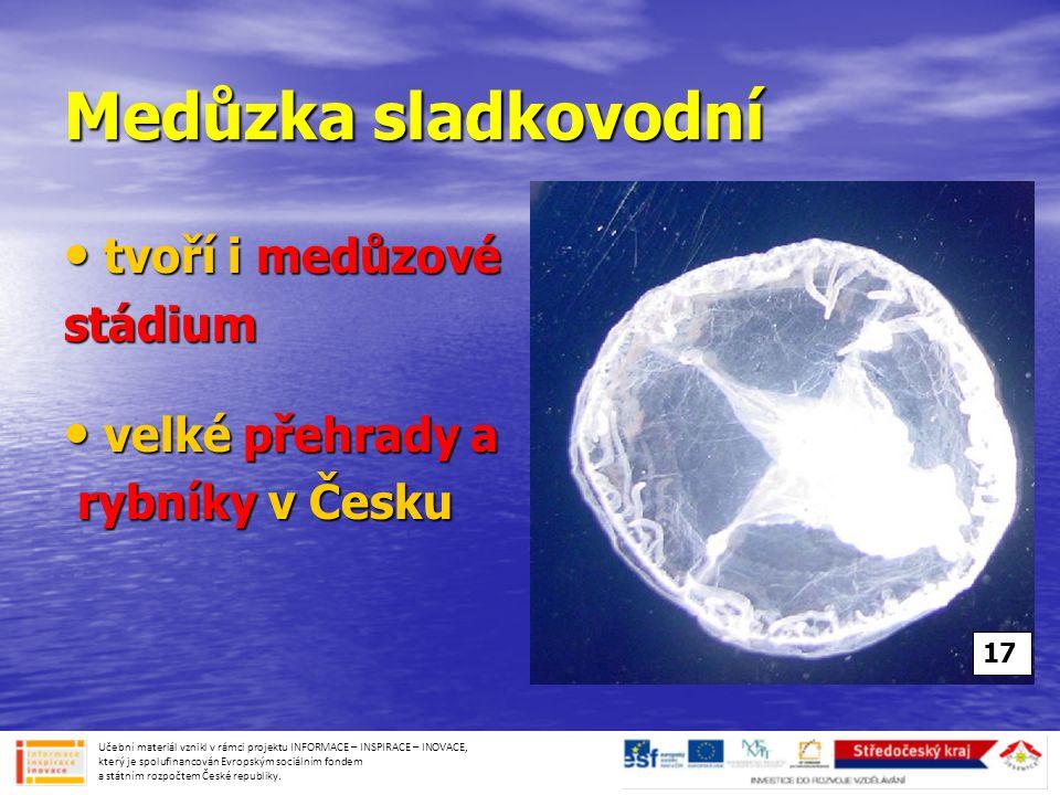 Medůzka sladkovodní tvoří i medůzové stádium velké přehrady a