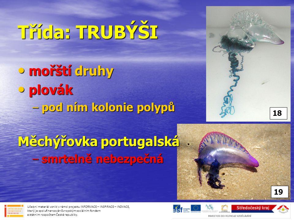Třída: TRUBÝŠI mořští druhy plovák Měchýřovka portugalská